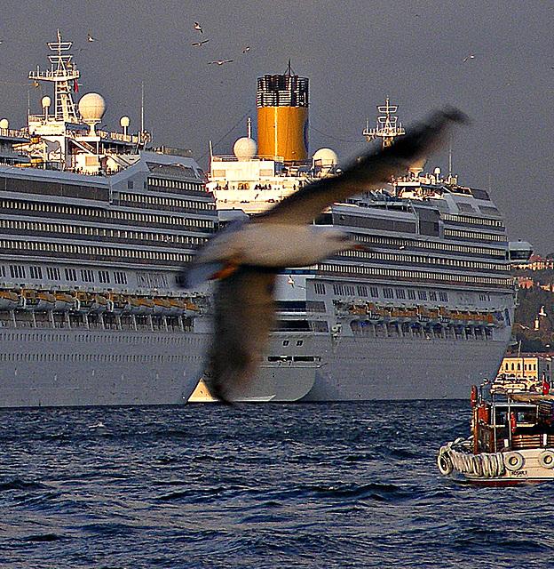 Gull at Galata
