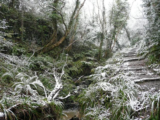 Hastings Country Park Snowy Glenn