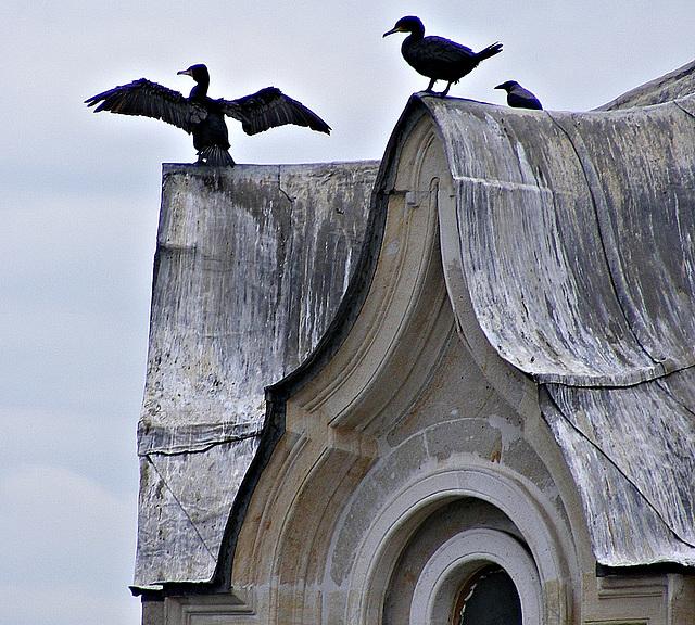 Beylerbey birds