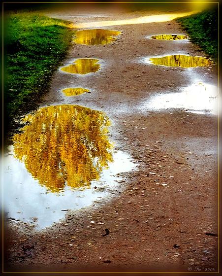 Golden lights*