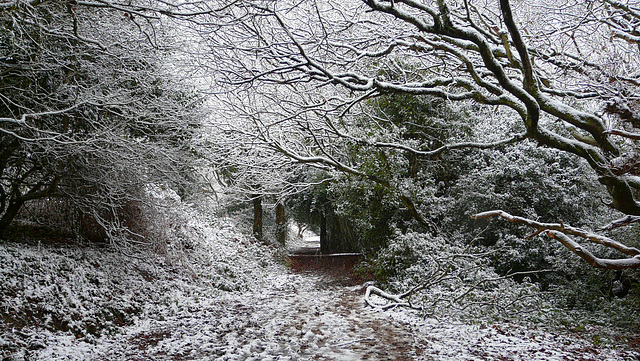 Hastings Country Park Path 2
