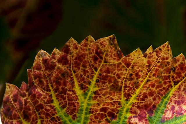 Southern Styria - The Dragon Leaf