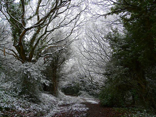 Hastings Country Park Path 1