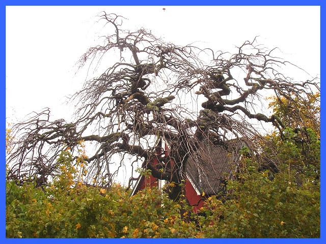 Arbre maléfique - Evil Swedish tree