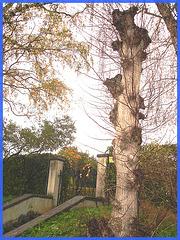 Arbre trapu totem / Squat totem tree-  Båstad, Sweden / Suède. 1er novembre 2008