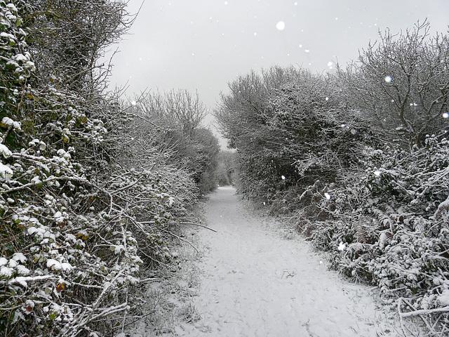 Hastings Country Park Winter Wonderland
