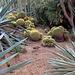 Cactus (3)