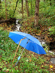 Stream and blue umbrella / Ruisseau et parapluie bleu- Båstad , Suède / Sweden.  21 octobre 2008