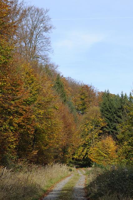 Bei Vielbrunn im Odenwald