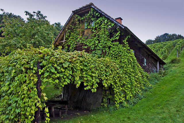 Southern Styria - Wine Cellar House