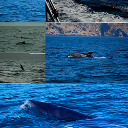 There are Dolphins in the Coast (2)