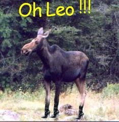 La chasse à l'orignal en talons hauts est ouverte !  Moose in heels hunting is open !