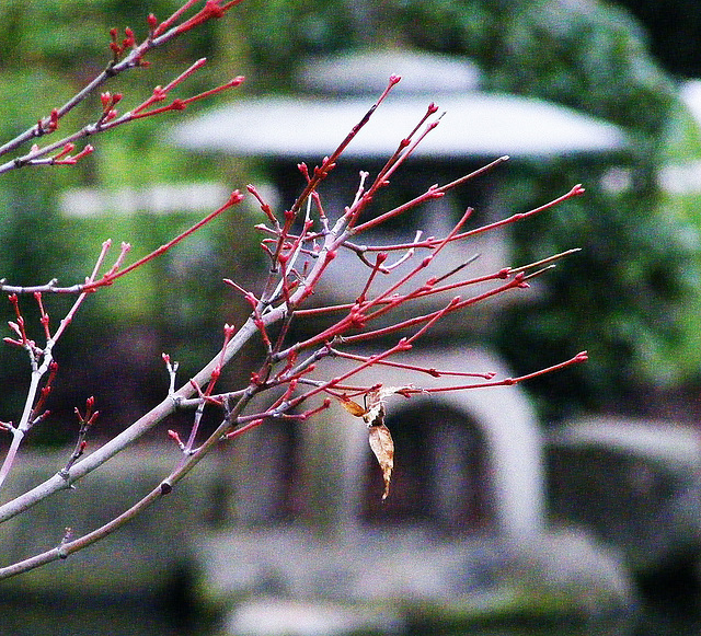 Red branches
