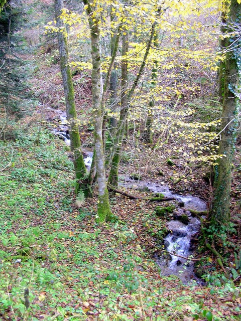 environs de Saint Dié des Vosges 88