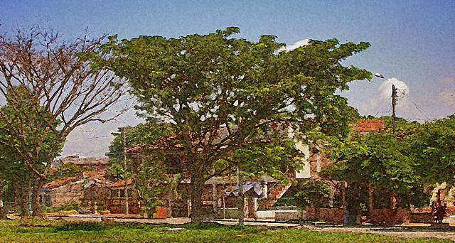 arbre colombien