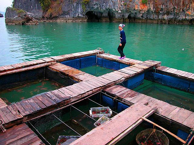 Fishing farm in Hạ Long Bay