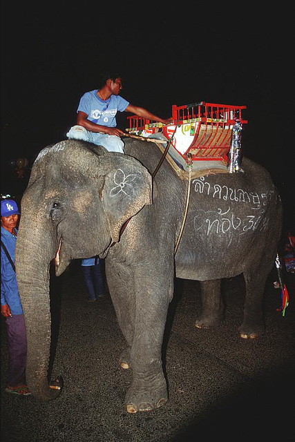 Mahout and his elephant called Lamduan