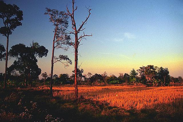 Dry paddy field on the way to Sri Saket