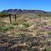Desert Lily Sanctuary (3608)