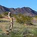 Desert Lily Sanctuary (3646)