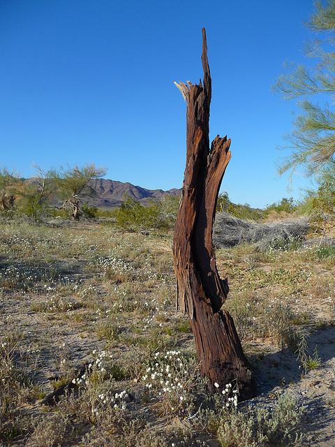 Desert Lily Sanctuary (3659)