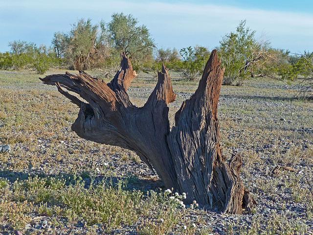 Desert Lily Sanctuary (3660)
