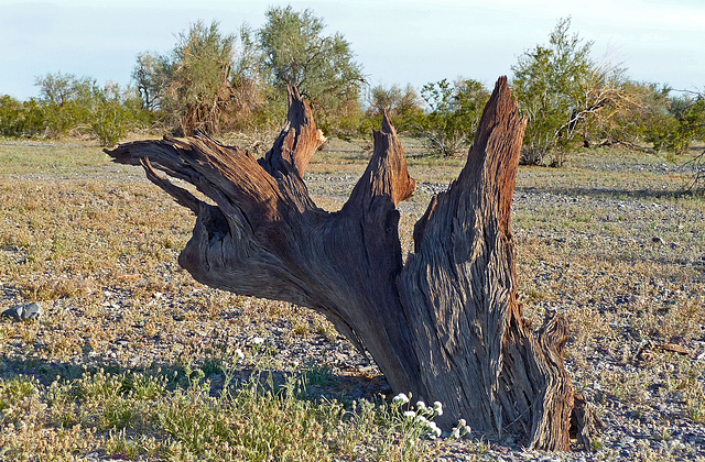Desert Lily Sanctuary (3661)