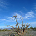Desert Lily Sanctuary (3662)
