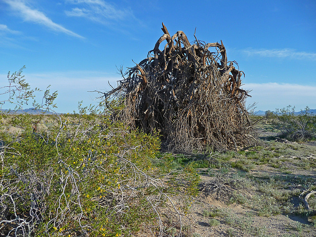 Desert Lily Sanctuary (3664)