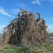 Desert Lily Sanctuary (3665)