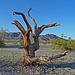 Desert Lily Sanctuary (3673)