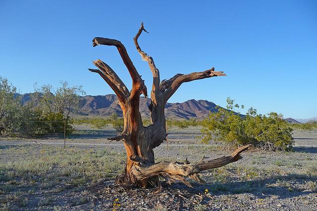 Desert Lily Sanctuary (3674)
