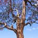 arbre printanier dans le Chhattisgarh