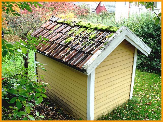 Mousse et feuilles d'automne / Autumn leaves and roof moss-  Båstad . Suède.  21 octobre 2008.