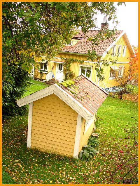 Mousse de toitures et feuilles d'automne / Moss and autumn leaves - Båstad , Sweden / Suède.  21 octobre 2008.