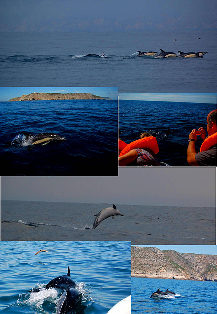 There are Dolphins in the Coast (1)