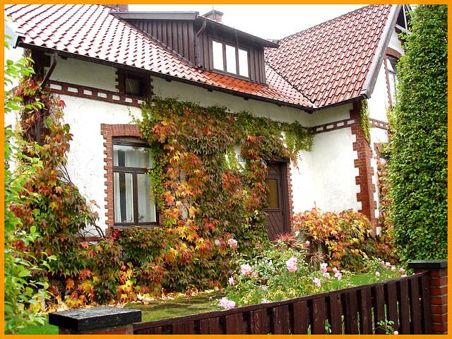 Écrin de verdure /  Wall of greenery -   Båstad - Suède /  Sweden.