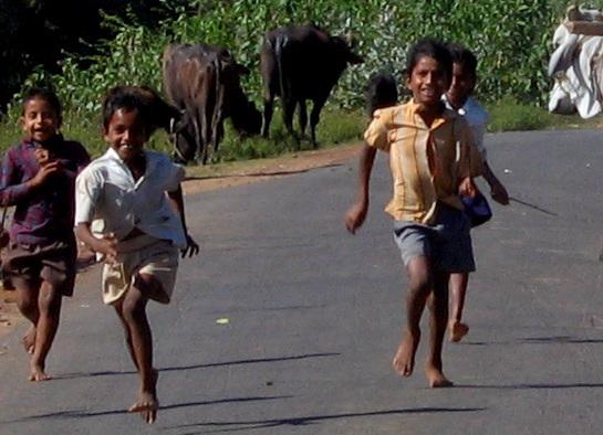cow-boys running