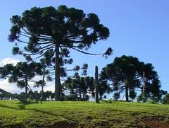 Pinheiro, Paraná au Chili