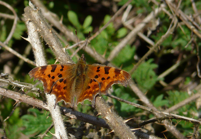 First Comma