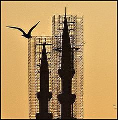 Bird and minarets