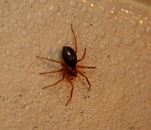 Unknown Poss Money Spider Family