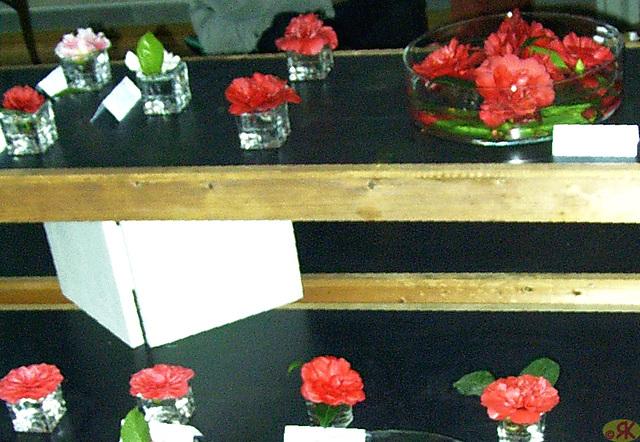 2009-03-22 24 Eo kamelio-ekspozicio