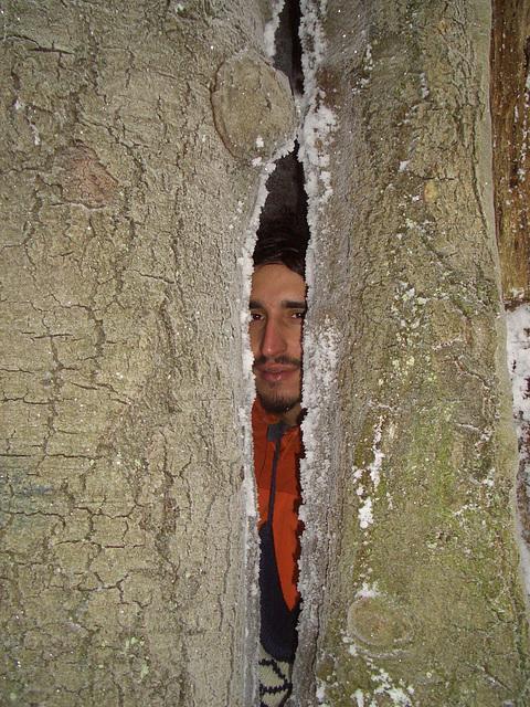 V strome