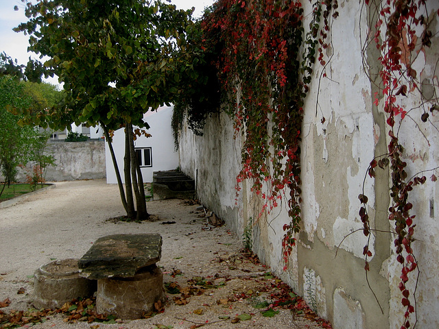 Hunting Ground of Mafra, old house backyard (1)