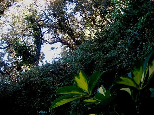 Malveira, Quinta da Cachoeira, light over the vegetal wall