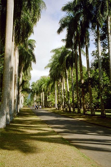 Palmoaleo
