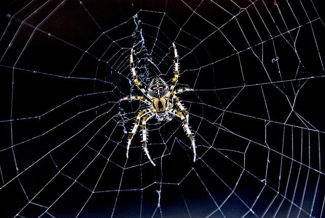 Locomotive Spider