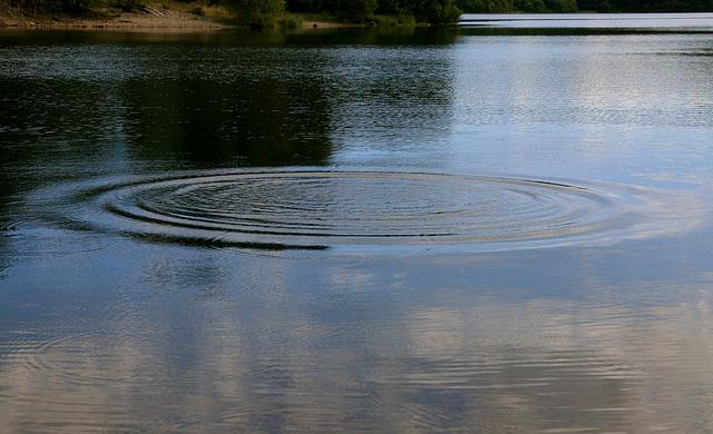 Un rond dans l'eau