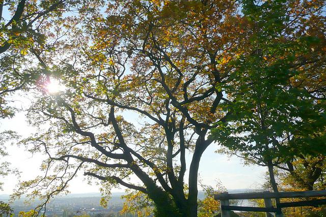 Spaziergang am Burglehnpfad mit Canalettoblick